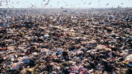 The Hidden Life of Garbage