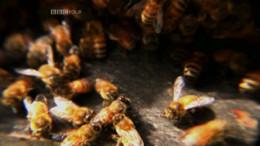 Who Killed The Honey Bee?